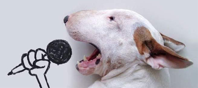 dog last