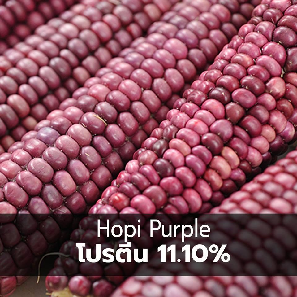 corn 07