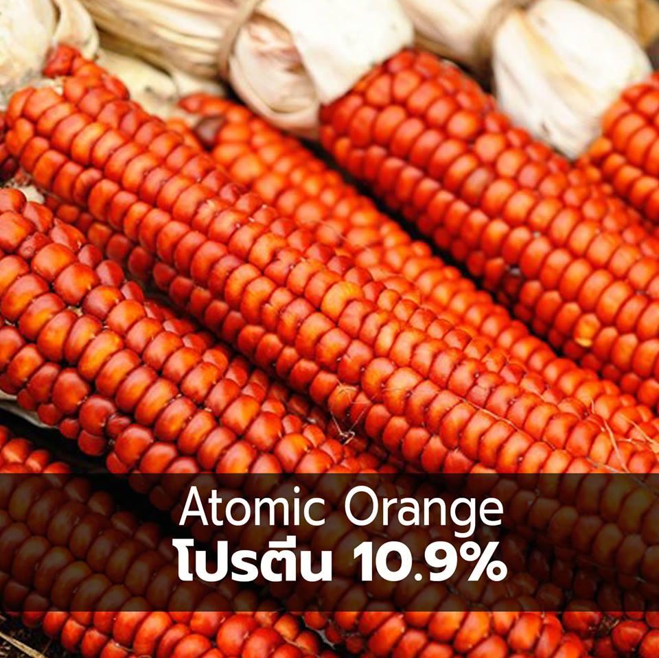 corn 10